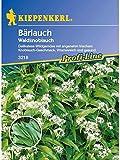 Bärlauch Waldknoblauch Allium ursinum