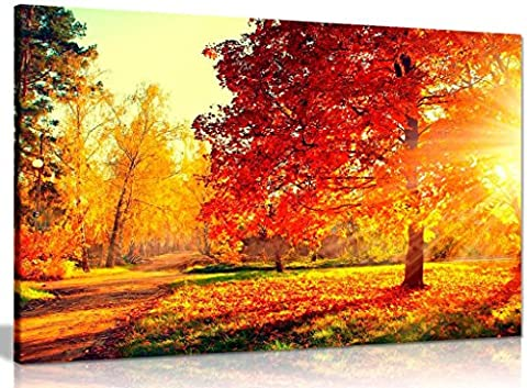 Autumn Scene Trees And Leaves In Sun Light Canvas Wall Art Picture Print (36x24in)