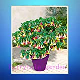 Semi di datura, 100pcs / bag arcobaleno semi della datura, rari semi di fiori, semi bonsai pacco professionali, piante naturali per giardino di casa