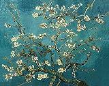 La Pittura DIY Olio, Pittura per Adulti con i Numeri Famosa nel Wondo della Pittura a Olio di Arte Muraria Albicocca Fiore di Van Gogh Pittura Collection per Amici Parenti 16*20 Pollici senza Cornice