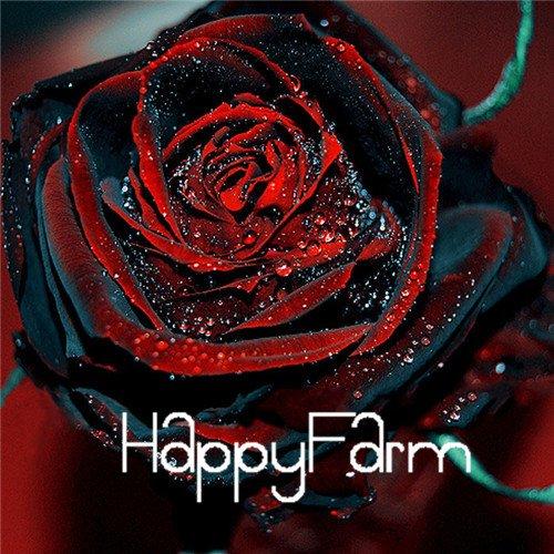nero-baccara-ibridi-semi-di-rosa-arbusto-di-fiori-100-semi-di-un-pacchetto-fresco-esotico-true-blood