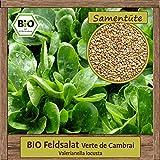 Hochwertige BIO Feldsalat Verte de Cambrai Samen Saatgut einjährig aus natürlichem Anbau Herkunftsland Deutschland