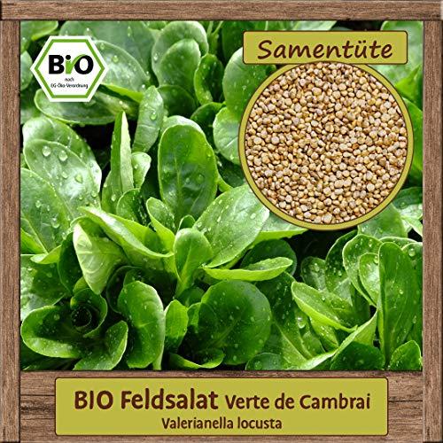 Samenliebe 1g BIO Feldsalat Verte de Cambrai Samen Valerianella locusta Rapunzelsalat Ackersalat Saatgut für ca. 1,5m²