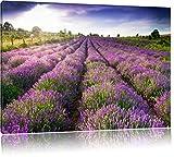 Lavendelfeld Provence Bild auf Leinwand, XXL riesige Bilder fertig gerahmt mit Keilrahmen, Kunstdruck auf Wandbild mit Rahmen, guenstiger als Gemaelde oder Bild, kein Poster oder Plakat, Format:120x80 cm