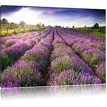 traumhafte lavendel provence mit einsamen baum format 60x60 auf leinwand xxl riesige bilder. Black Bedroom Furniture Sets. Home Design Ideas