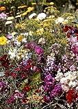 Tropica - fiori selvatici - Bretagna - giardino profumato (30 tipi) - 1000 semi