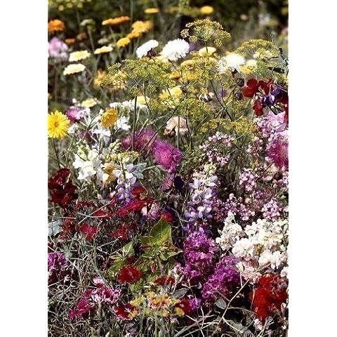Tropica - fiori selvatici - Bretagna -