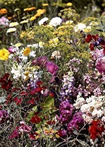 Tropica - Wildblumen - Bretagne - Duftgarten (30 Sorten) - 1000 Samen