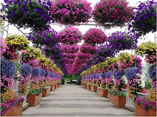 100 pcs graines de pétunia graines rares fleurs de pétunia vivaces ornementales jardin à la maison des plantes en pot graines bonsaï fleurs rouges