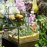 NCYP Large House Shape Close Glass Geometric Terrariumn Tabletop Succulent Plant Box Planter Moss Fern with Swing Lid Reptile 21.84cm x 17.01cm x 15.24 cm