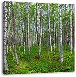 Birkenwald, Format: 60x60 auf Leinwand, XXL riesige Bilder fertig gerahmt mit Keilrahmen, Kunstdruck auf Wandbild mit Rahmen, günstiger als Gemälde oder Ölbild, kein Poster oder Plakat