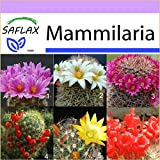 SAFLAX - Kakteen - Mammilaria Mischung - 40 Samen - Mammilaria Mix