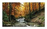 Wallario Herdabdeckplatte / Spritzschutz aus Glas, 1-teilig, 90x52cm, für Ceran- und Induktionsherde, Kleiner Bach über Steine im Herbstwald