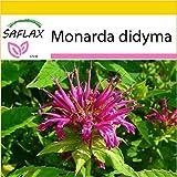 SAFLAX - Set per la coltivazione - Bergamotto - 20 semi - Monarda didyma