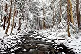 Fine Art Print – Stream in Winter, Nova Scotia, Kanada von Bentley Global Arts Gruppe, canvas, multi, 16 x 10