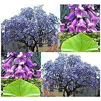 Shoopy Star 300 semillas de tinte azul Indigofera tinctoria Indigo ???? usados ?