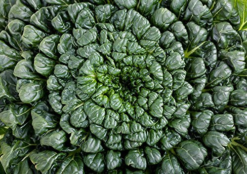 Portal Cool 500 Samen: Tatsoi 200-4000 Grün Mustard Seed Asian Thick Zarte Hohe !
