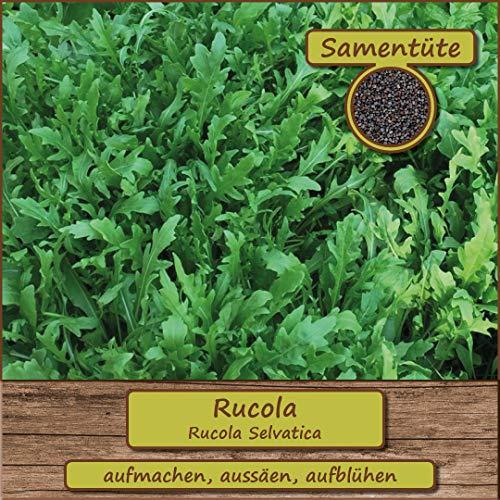 Samenliebe Rucola-Samen  200 Samen hochwertige Kräutersamen - zum Eigenanbau - aus...