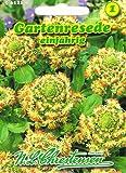 Gartenresede rosenrot, einjährig, großblumig, wohlriechend 'Reseda odorata grandiflora' duftend