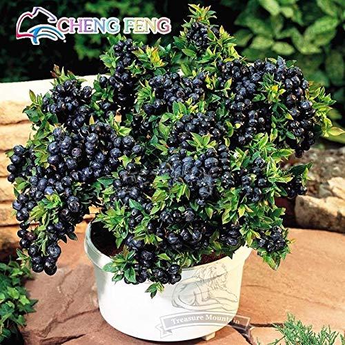100 semi ortaggi e frutta mirtillo plantas black pearl fragola diy countyard bonsai piante da fiore per la casa e giardino: nero