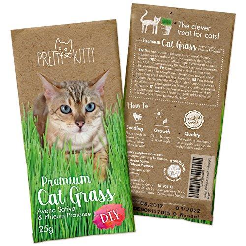 amen von Pretty Kitty, 25g Saatmischung für 10 Töpfe fertiges Katzengras, 1 Beutel (Gras-samen Für Haustiere)