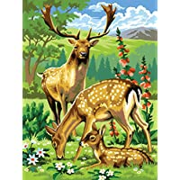 KSG - Woodland Animals Paint by Numbers