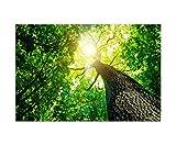 120x80cm - Fotodruck auf Leinwand und Rahmen Baumkrone Wald Sonnenstrahlen Natur - Leinwandbild auf Keilrahmen modern stilvoll - Bilder und Dekoration