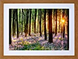 BLUEBELL WOOD SUNRISE TREES PHOTO FRAMED ART PRINT PICTURE & MOUNT F12X203