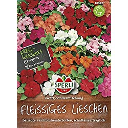 Hdk-Versand Blumen Samen von Sperli (Fleissiges Lieschen)