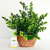 #3: Ashiyanadecors Artificial Green Plant for Home, Garden, Office, Wedding Décor
