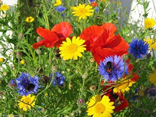 100-pure-cornfield-wild-flower-seed-meadow-b-pretty-wild-seeds-1kg-no-grass