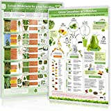 [2er Set] Essbare Wildkräuter für Grüne Smoothies (DINA4) Teil 1 und Grüne Smoothies in 5 Minuten (DINA4) - laminiert (2019): Schnell eindeutig ... selber sammeln und mit gutem Gefühl genießen)