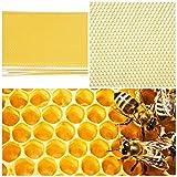 LECHI Honeycombღ Fond de Teint - 30 pièces pour Apiculture - Feuille de Teint - Outil de Cadre pour extracteur de Miel
