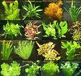 9 Bunde mit über 60 Aquarium-Pflanzen + Dünger - Farbiges Sortiment für 60-100 Liter Aquarien, Wasserpflanzen für Alle Aquarienbereiche