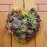 Behälter für Wandblumen, innovative Herzform, handgefertigter Blumentopf für Sukkulenten im Topf, Geschenk ideal für Sukkulenten, Luftpflanzen, Minikakteen, künstliche Pflanzen und mehr
