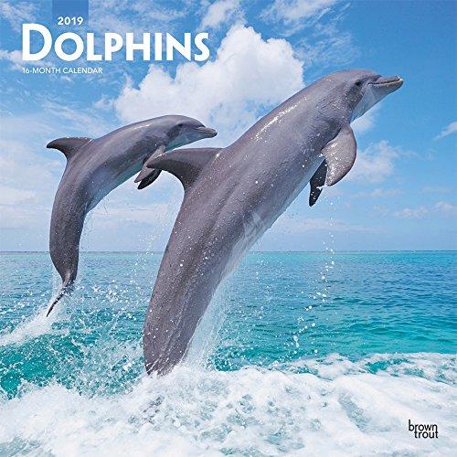 Dolphins - Delfine - Delphine 2019 - 18-Monatskalender (Wall-Kalender)