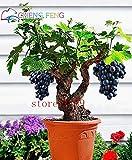 Pinkdose 50pcs sehr seltene Goldfinger Weinrebe Pflanzen Erweiterte Obst Bonsai Natur Wachstum Grape Köstlicher Fruchtpflanzen für Haus Garten: Mehrfarbig