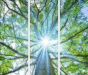 pro art bilderpalette gla584c dt baumwipfel tableau triptyque sous verre en motif cime d 39 arbre. Black Bedroom Furniture Sets. Home Design Ideas
