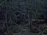 Michael Lange: Wald