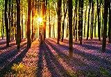 Idealdecor 952 Woodland at Dawn 366 x 254 cm, 8-teilig