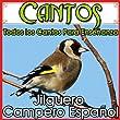 Cantos, Todos los Cantos Para Enseñanza. Jilguero Campero Español