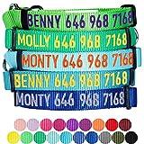 Collier de dressage et de sécurité Blueberry Pet pour chiens - 12 couleurs...
