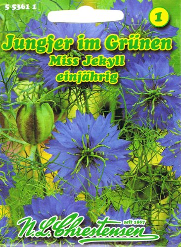 Jungfer im Grünen 'Miss Jekyll' , einjährig, blau,Violettblaue Blüten, dekorative Samenstände, (Nigella deascena) (Nigella Samen)