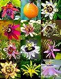 Portal Cool Exotische Passi Mix Blütepassionsfrucht Essbare tropische Kletterpflanze Samen 15 Samen
