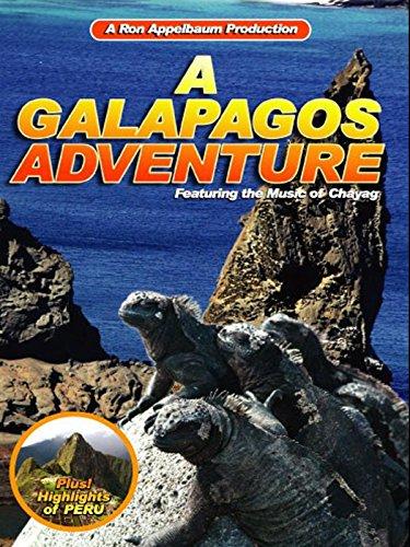 A Galapagos Adventure [OV] - Sally Lightfoot Crab