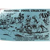Fossil Set 12 Kinds, Hand Collected in Utah, Trilobite ,Brachiopod, Dinosaur Bone by Natural Wonders