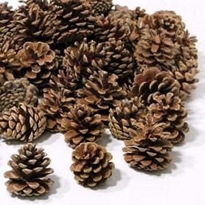 Pomme De Pin 1gk (50) Décoration De Noël Sapin Austriaca Naturel