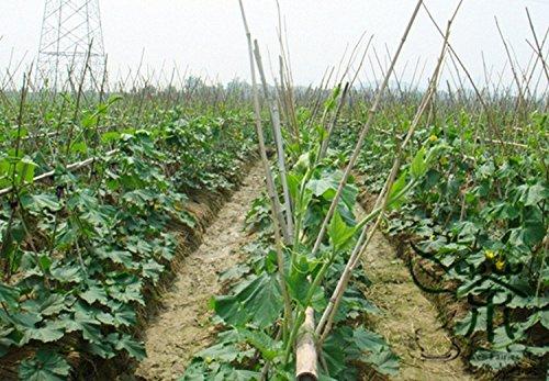 Noir Melon Benincasa hispida Graines 60pcs, perte de poids des produits naturels Winter Melon Vegetable Seeds, annuelle d'hiver Gourd Seeds
