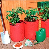 Tomaten-Pflanztaschen, 3er-Set