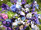 3-4 m² Sommerblumenmischung Traumgarten in Blau blautöne Blumensamen Blumensaat auch für Balkonkästen